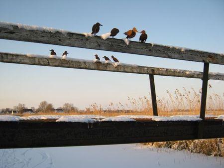 Winter 2012 021 -kl.jpg