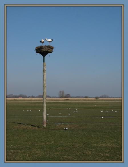 Weerribben en Wieden 061 - kopie.JPG