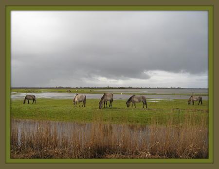 Lauwersmeer 014.JPG